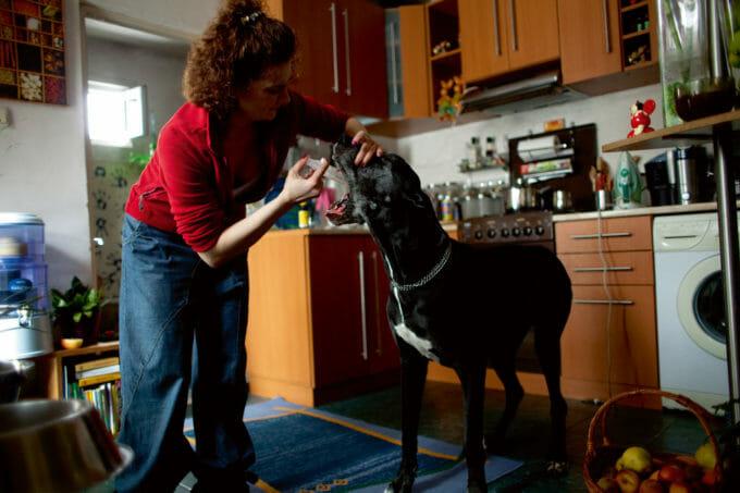 o femeie îi administrează câinelui ei medicamentele zilnice, în propria bucătărie.