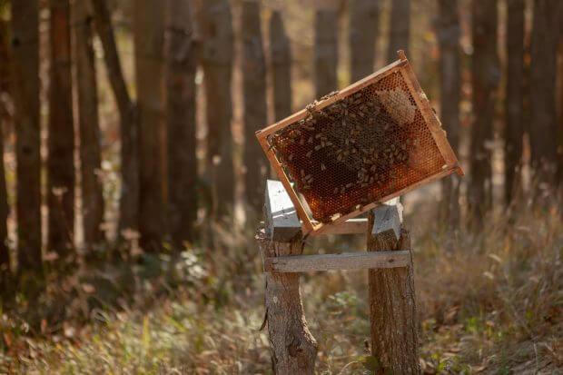 stupină albine în mijlocul pădirii