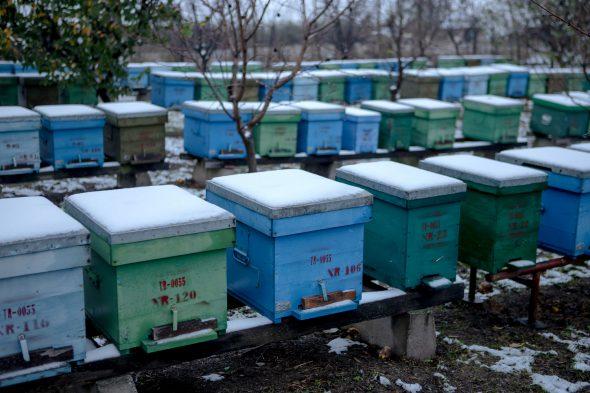cutii, stupi pentru albine