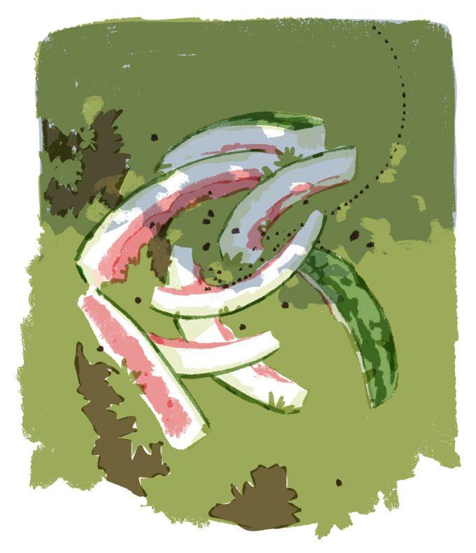 ilustrație cu sâmburi și coji de pepene aruncate în iarbă