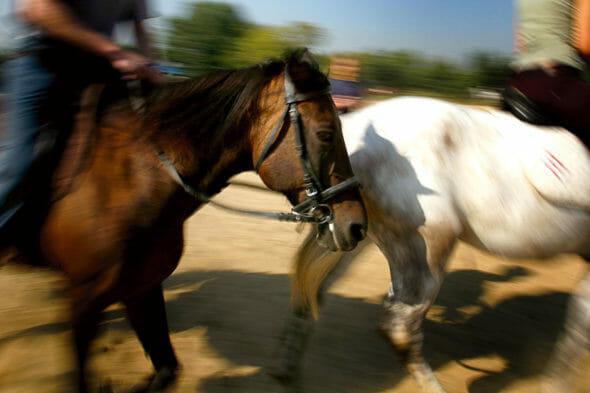 Doi cai în galop la adăpostul Steaua Speranței din București.