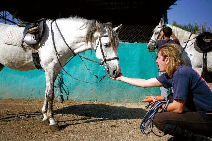 Un bărbat hrănește un cal din adăpostul Steaua Speranței din București.