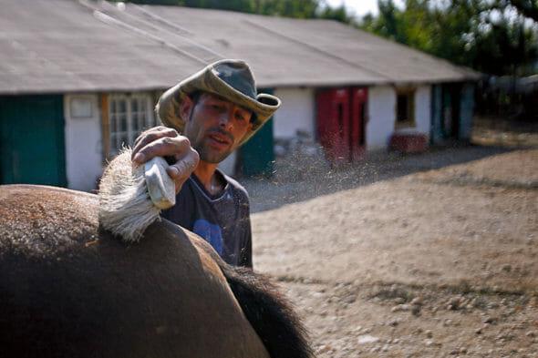 Un bărbat țesală un cal din adăpostul Steaua Speranței din București.