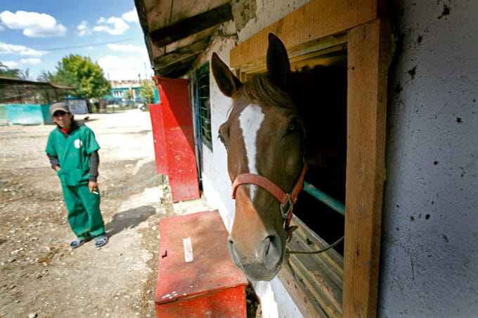 Un cal scoate capul pe fereastra grajdului, la adăpostul Steaua Speranței din București.
