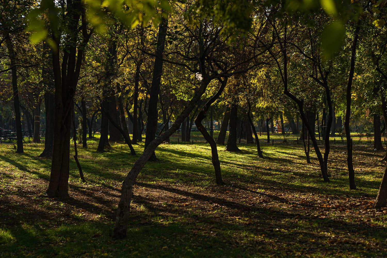 Arbori tineri în competiție pentru lumină