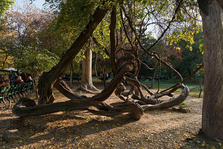 lianele care au devenit un loc îndrăgit de vizitatorii parcului
