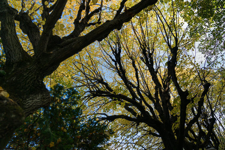 Crengile arborilor se întind către lumină