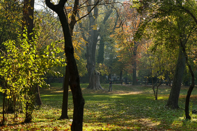 O parte din arborii din Cișmigiu și o persoană care îi admiră