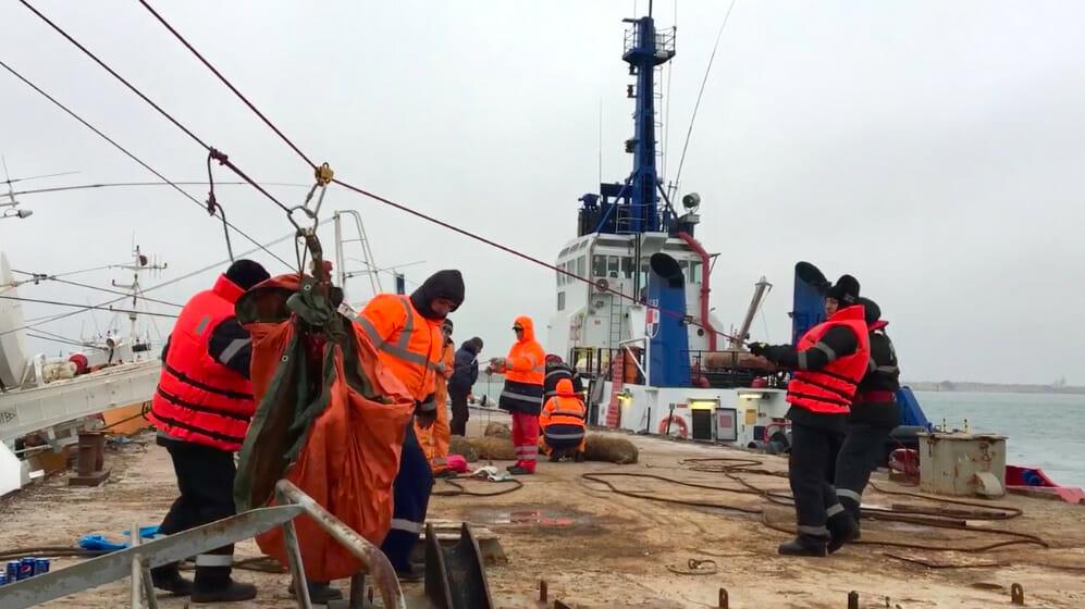 O parte din oile salvate au fost transportate de pe navă folosind o tiroliană.