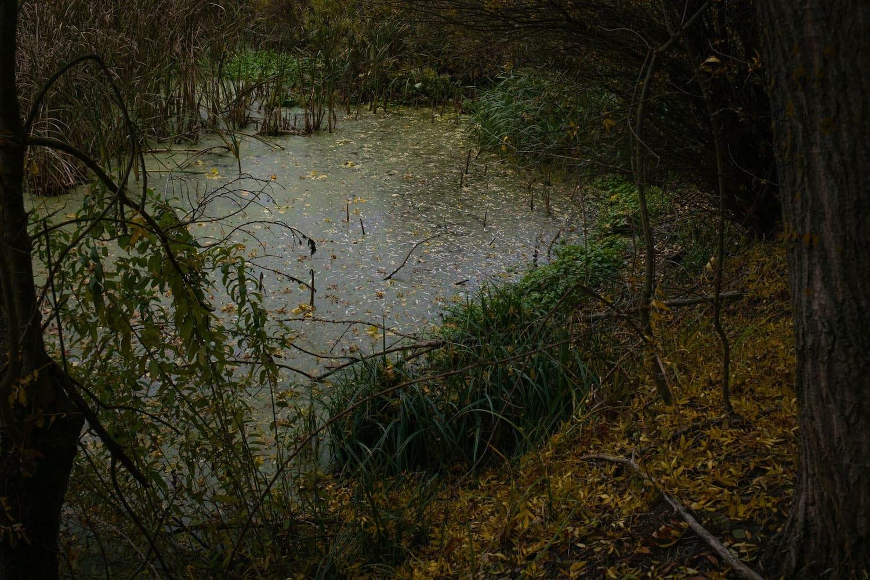 lac din pădure
