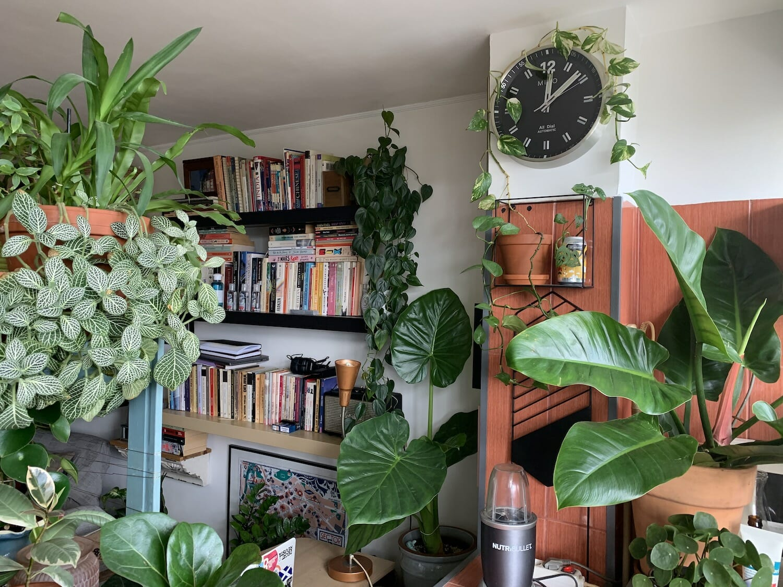 garsoniera Luizei și o parte din cele 80 de plante