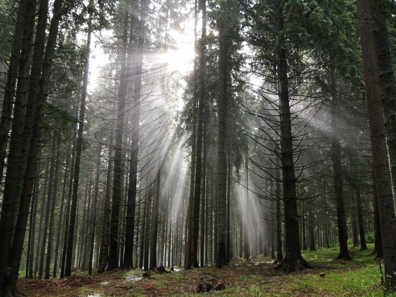 Razele soarelui pătrund într-o pădure