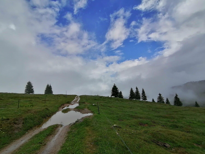 O baltă în mijlocul drumului pe un deal